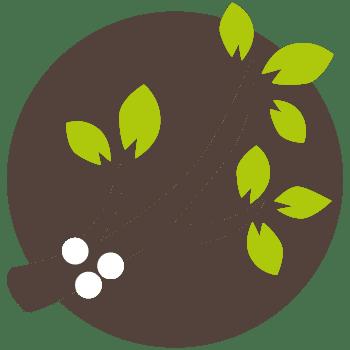 Bestrijdingsplan eikenprocessierups Nature Care